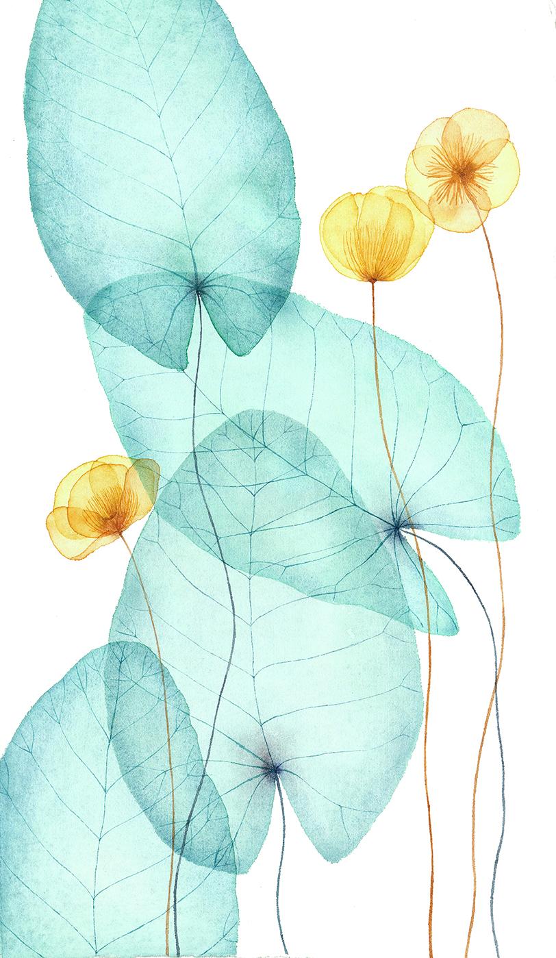 waterlilies illustration