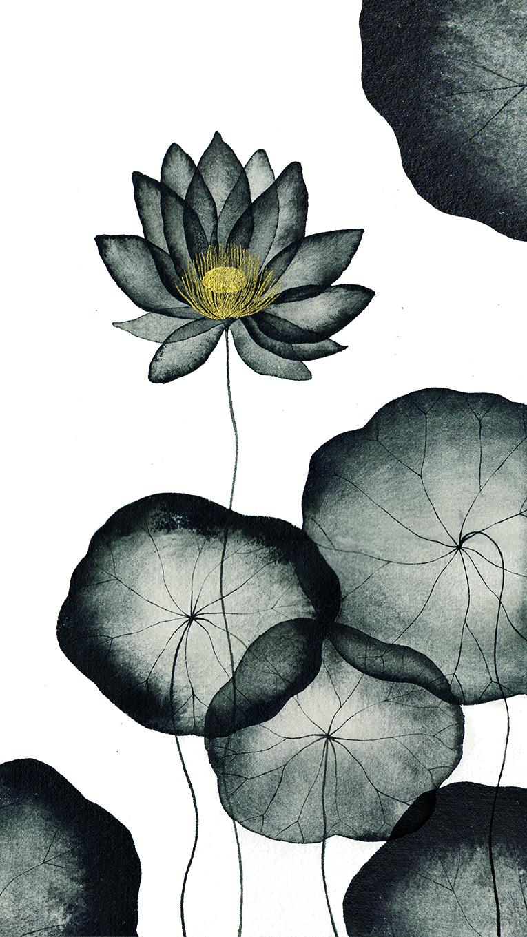 ninfea nera, waterlilies illustration